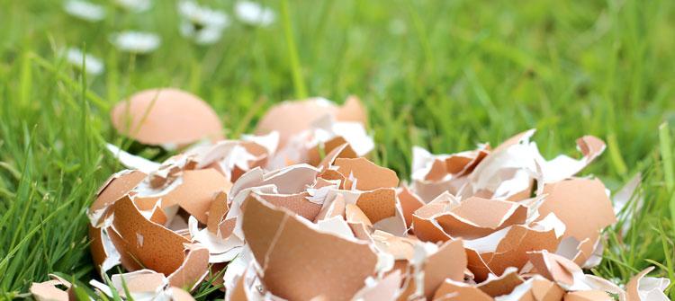 Dein Land Ei zeigt, was man Nützliches aus Eierschalen herstellen kann.