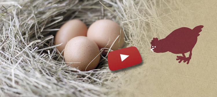 Brandneu: Unser Youtube-Kanal vom Hof Alpermühle!
