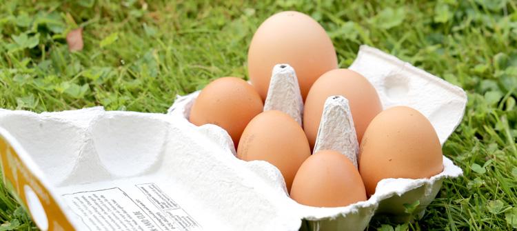 Dein Land Ei zeigt eine 6er Schachtel mit Eiern verschiedener Größen im Vergleich.
