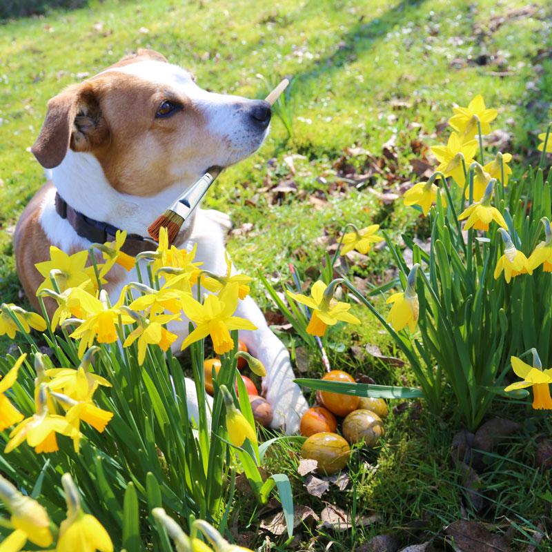 Hofhund Anton mit bunten Bio-Eiern
